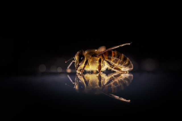 """Foto-Wettbewerb """"Wunderwelt der Bienen"""""""